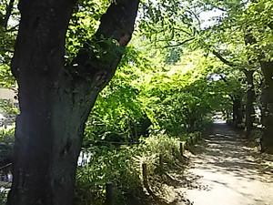 Dsc_1177_1